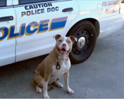 Dog rescued from abuse and neglect becomes New York's first pit bull K9 officer