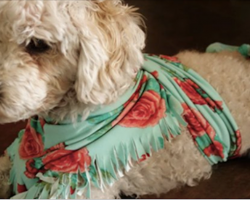 If You See a Dog With a Scarf Wrapped Around Its Body, Here's What It Means