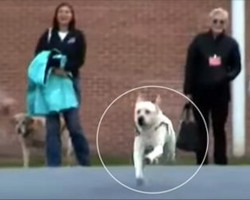Struggling Soldier Receives Service Dog, Then Discovers Truth Of Woman Inmate Who Trained Him
