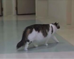 Stray Cat Wanders Into Nursing Home, But Footage Proves Why This Cat Is Extraordinary