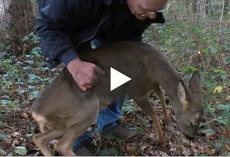 He thought the deer was giving up on life. But then this happened…