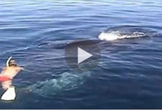 They thought this whale was dead. Then something AWESOME happened that brought tears to my eyes.