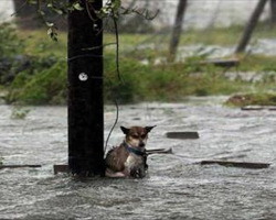 Tied up and left to face the wrath of Harvey: Picture of abandoned dog that's breaking the hearts of Texans as flood waters rise!
