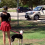 She takes two heartbroken dogs to the park. But when they see the man in white, everything changes…