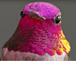 Woman Develops Bond With Over 200 Hummingbirds, Now They Complain If She's Late To Feed Them