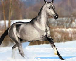 21 Horses That Are So Beautiful You'll Think They Are Fake