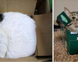 30 hysterical cats who have no concept of what a bed is