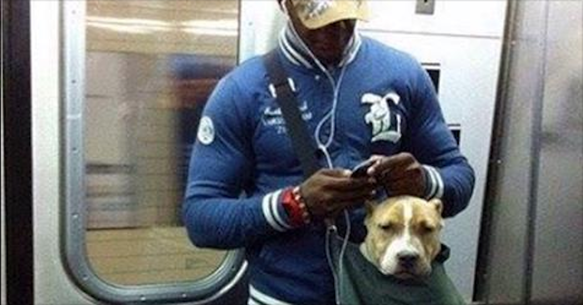Nyc Subway Bans Dogs Unless They Fit Into A Bag These Big