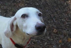 Escape Dog Returns To Shelter 11 Times. Then They Realized He Was Trying To Tell Them Something…
