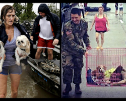 These Photos Captured During Harvey Prove Humanity Is Thriving!