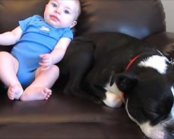 Baby Poops In His Onesie, But Dog's Reaction Leaves Millions Of People In Hysterics
