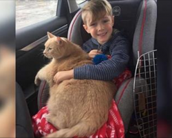 Mom tells boy he can pick any animal at shelter. He picked this elderly, overweight and shy cat