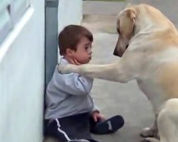 Boy With Down Syndrome Has No Friends. The Dog's Reaction Brought Everyone To Tears.