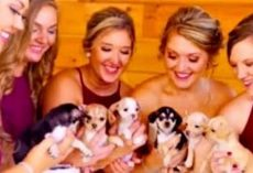 Bride Trades Expensive Flower Bouquets For Rescue Dogs To Walk Down The Aisle With