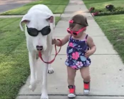 Deaf Great Dane Abandoned By Owner And Labeled 'Useless', Has Unbreakable Bond With Little Girl