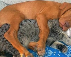 These Dogs And Cats Just Can't Get Enough Of Each Other