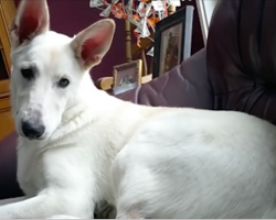 Dog Lets Out A Squeaker, The Unforeseen Fart Has The Dog And Mom Wondering
