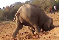 Elephant Spent 11 Hours Digging A Hole, But Nobody Expected Her To Pull This Out