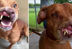 Family Abandon Their Dog Because He Was 'Ugly'. Gets Surgery And Has Amazing Transformation