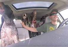 Dad Put Camera In Car To Show 4 Dogs Flipping Out When They Hear They're Going To The Park