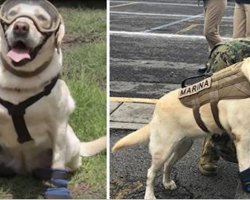 Rescue dog rescues 52 people after Mexico earthquake. This incredible pooch is stealing the internet's heart.