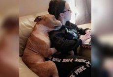 Woman saves dog from the shelter. Now grateful dog can't stop snuggling with her