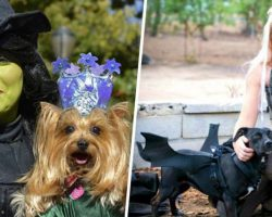 25 Killer Halloween Costumes For You & Your Dog To Rock Together