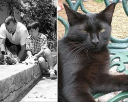 Here's How A 72-Year-Old Museum Manager And 54 Of Hemingway's 6-Toed Cats Survived Hurricane Irma