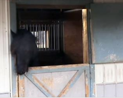 Their Horse Kept Disappearing, So They Set Up A Camera To Find Out Why