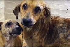 2 Dogs Were Abandoned By Their Families, But Fate Brought Them Together To Help Each Other Heal