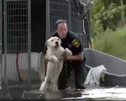 Pet Owners Who Left Dogs Chained To Trees And Cars In Hurricane Could Face Criminal Charges