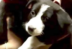 Rescuer Goes Into Abandoned Basement, Then Moves Dresser And Finds Scared 10-Week-Old Puppies
