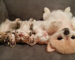 This Puppy Doesn't Want To Wake The Kittens, So Watch What She Does Instead!