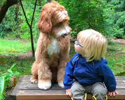 Family Is Nervous Foster Child Won't Adjust, But Then He Meets Their Dog