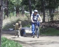 See the Great Dane Running Alongside the Bike? Well, Watch The Next Part… ROFL!