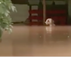 Rescuers Rush To Save This Dog From Rising Flood Waters – And Find Something Startling