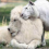 White Lion And White Tiger Just Had Babies And They're The Cutest Things On The Planet