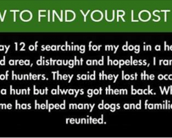 10 Genius Hacks That Every Dog Owner Needs To Know
