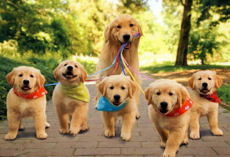11 Bizarre And Hilarious Facts About Dogs!