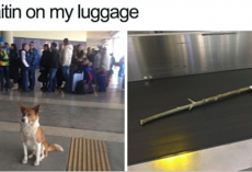 15 Wholesome Dog Memes That Are Too Pure For This World