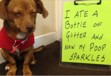 18 Dogs Who Are Naughty And Have Absolutely No Shame
