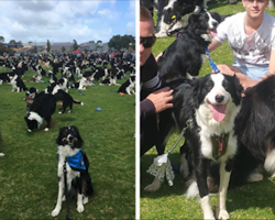 576 Border Collies Get Together In One Place To Break A World Record
