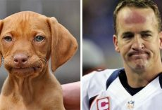 These Dogs Totally Look Like Hollywood Celebrities