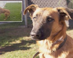 Shelter Dog Is Sad When She Sees Her Old Family Picking Out A New Dog, But Now Our Hearts Are Melting!