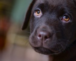 Things You MUST Stop Doing To Your Dog