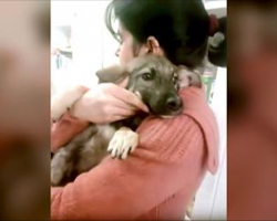 Abused Dog Cries When She Finally Has A Kind Hand Touch Her