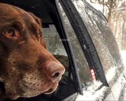 Man takes his dog, dying of cancer, on an epic road trip