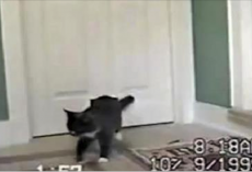 Their Cat Came Home Bringing Her Special Friend – Who Follows In Will Melt Your Heart!