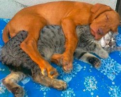 8 cats and dogs that prove you don't need to be the same species to be best friends