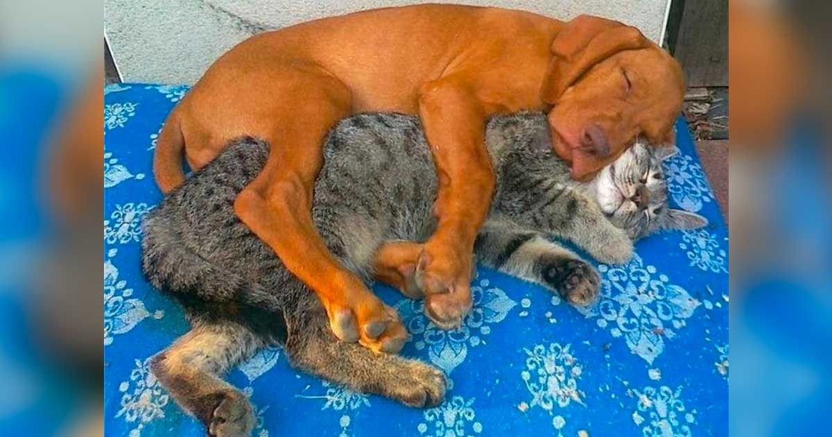 8 Cats And Dogs That Prove You Don T Need To Be The Same Species To Be Best Friends